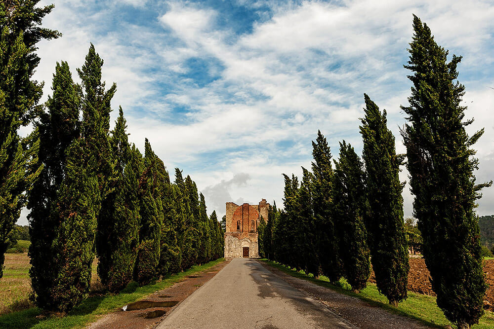 wedding venue: entrance with cypress to tuscan roofless san galgano abbey