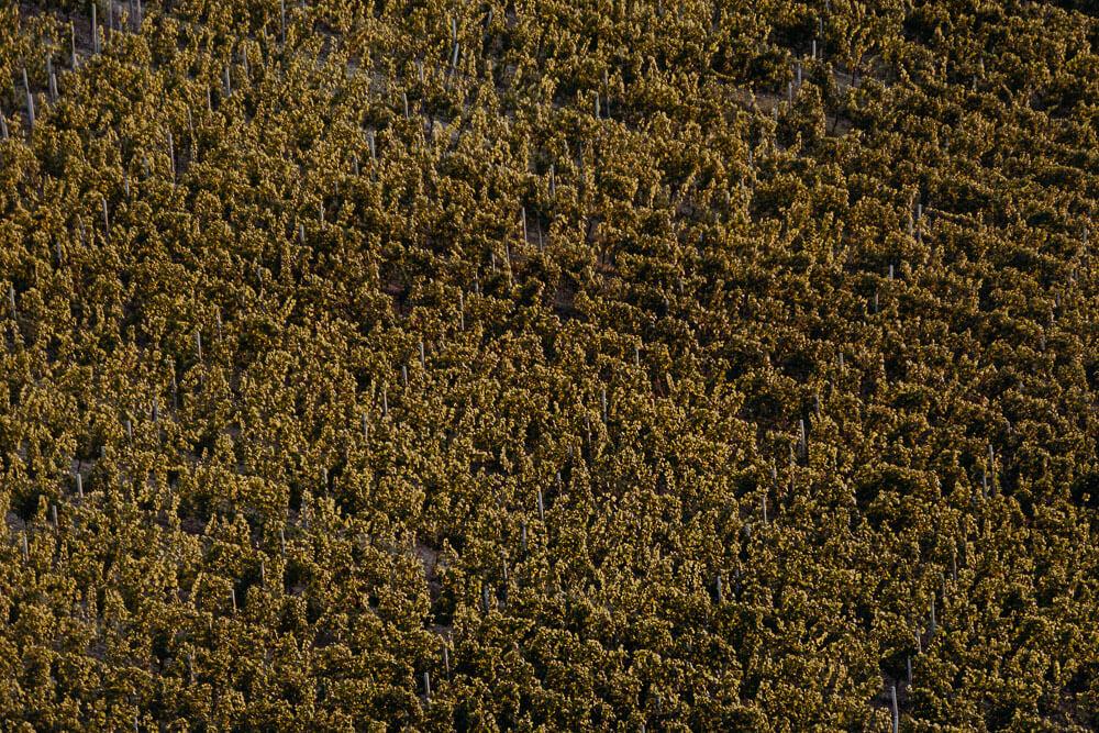 langhe vineyards, aerial view
